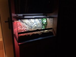Reptile enclosure and 2 blue tongue lizards Nunawading Whitehorse Area Preview