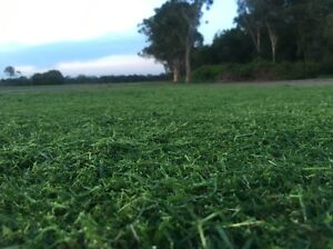 Turf for sale open 7 days a week Chandler Brisbane South East Preview