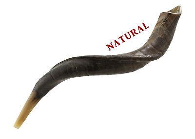 Yemenite Kudu Horn Shofar Easy Blow Perfect Sound Natural Medium Size 26