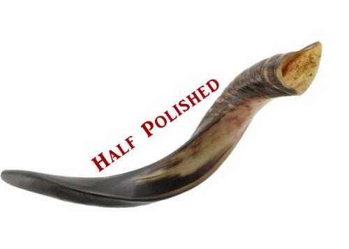 "Yemenite Kudu Horn Shofar - Half Polished Easy Blow Perfect Sound-Small 22""-24"""