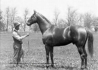 Horse Racing Photo (Man o War PHOTO Horse Racing Champion Belmont Stakes Preakness Race)