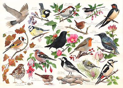 The House Of Puzzles - 1000 PIECE JIGSAW PUZZLE - Birds In My Garden