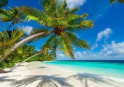 XXL Poster 100 x 70cm Palme am Strand bei Sonnenschein und blauem Himmel (S-838)