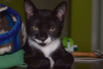 Two Snuggly Rescue Cats for Adoption