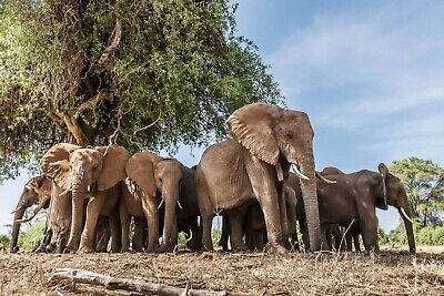 US Seller- dorm room wall decor African elephant animal art - Elephant Room Decor
