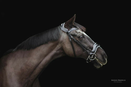 Dressage Bridle Patent Leather Anatomical Fully Padded