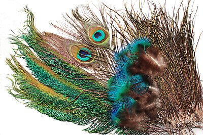 """Strung Peacock Herl 12-14/"""" Fly Tying Nature/'s Spirit  Extra Extra Long 1//8 oz"""