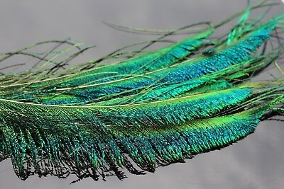 "Peacock Herl..XLARGE pack..4/"" wide strung herl..LOTS OF HERL..COMBINE SHIPPING"