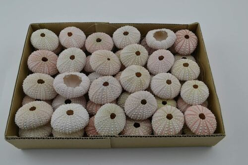 100 PCS Pink SEA Urchin Beach Wedding Nautical