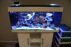 Marine Fish and Coral Tank - Complete Set Up Blakeview Playford Area Preview