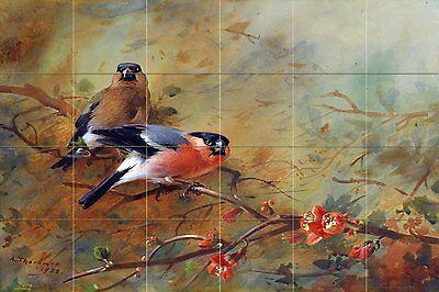 Bullfinches and Pyrus Japonica Tile Mural Kitchen Bathroom Backsplash 25.5x17
