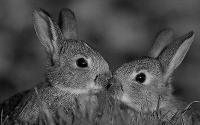 Gerahmter Druck – Süß Küssen Baby Kaninchen (Bild Plakat Wildes Tier Wildtiere