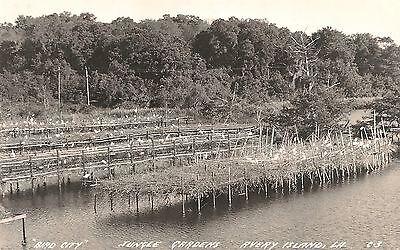"""Bird City"" Jungle Gardens Avery Island LA RP Postcard 1954"