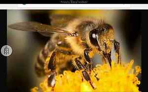 Bee hives for sale Inverell Inverell Area Preview