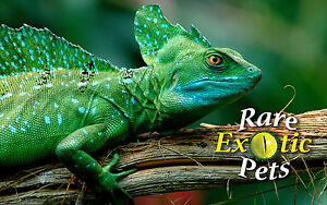 Reptiles, Snakes, Lizards and Feeders