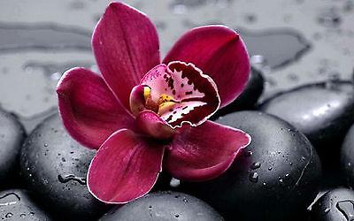 la Orchidee und Schwarz Steine (Bild Pflanzen Nelken Roses) (Lila Und Schwarzer Dekorationen)