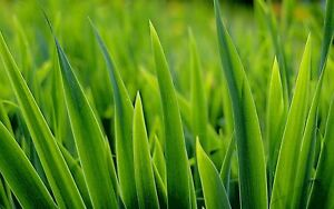 Lawn Mowing Service Blaxland Blue Mountains Preview