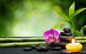 Thai Massage shop for sale Ashfield Ashfield Area Preview