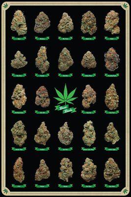 BEST BUDS - WEED POSTER - 24x36 MARIJUANA SMOKING POT