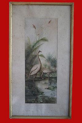 Aquarelle oiseaux . fin XIXème début XXème siècle