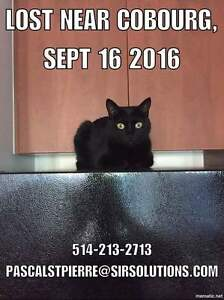 Missing black cat