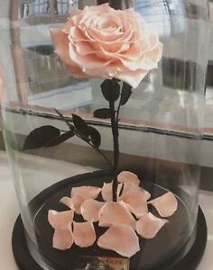 THE BEAUTY AND THE BEAST ARTIFICIAL LASTING ROSE ! Condell Park Bankstown Area Preview