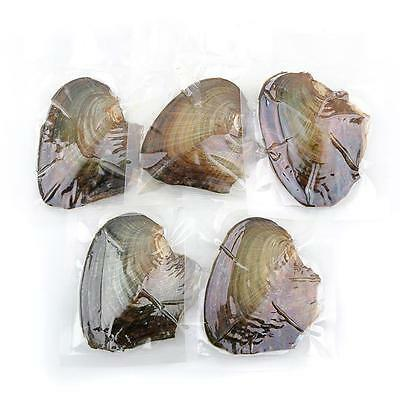 Akoya Pearl Oysters With Real Pearl 7-8mm Freshwater Pearl Vacuum Packaging 1pcs
