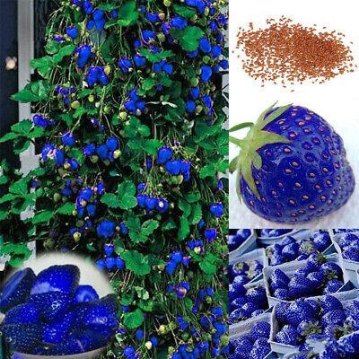 200x Blue Strawberry Seeds Home Garden Farm Delicious Nutritious Fruit Plant Mgi Home & Garden