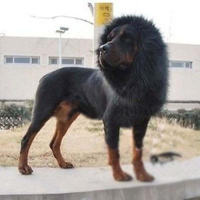 Pet Costume Lion Mane Wig Hair for Large Dog Halloween Fancy Dress up Black GA