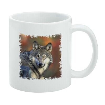 Gray Wolf with Fall Background White -