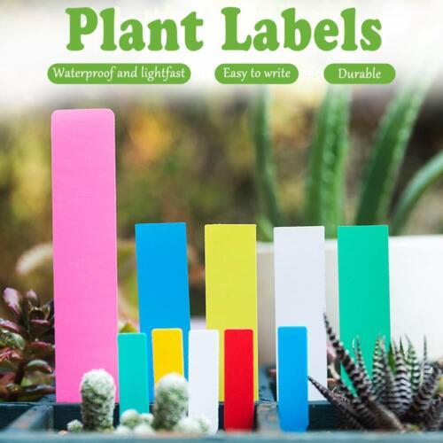 500x Stecketiketten 10x2 cm farbig bunt Pflanzetiketten Pflanzschilder Etikett