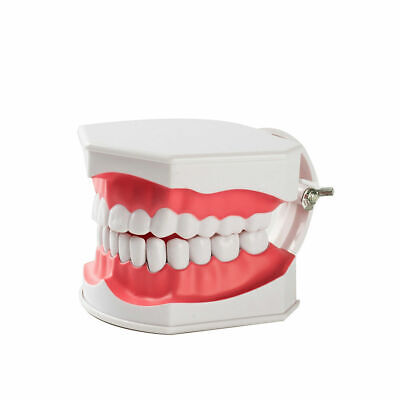Easyinsmile 2 Times Dental Teeth Model With Removable Teaching Typodont Model
