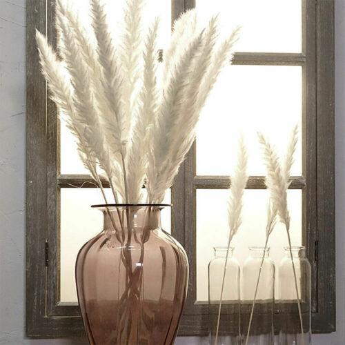 15 x Natürlich Pampasgras Trockenblumen Deko Raumdeko Kunst für Trockenstrauß