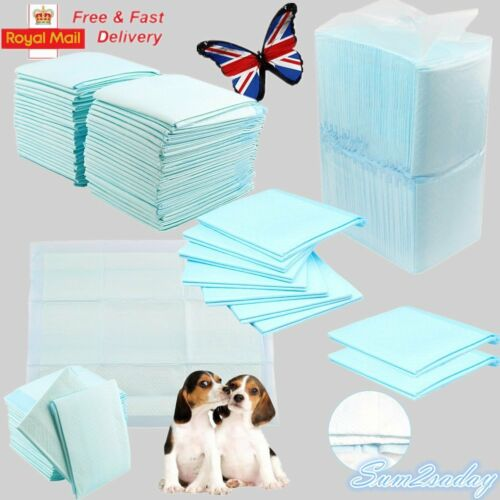 Paper training a puppy uk