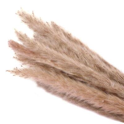 15Pcs Natural Dried Pampas Grass Reed Home Wedding Flower Decor 2020