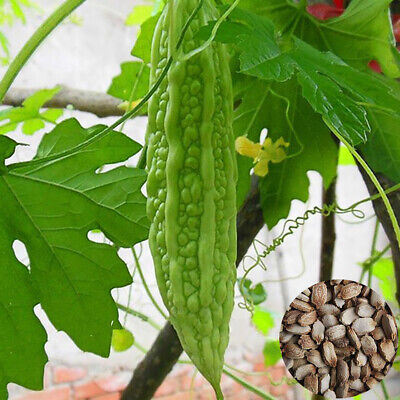 100X Green Vegetable Momordica Charantia Bitter Gourd Melon Seeds Garden Plant M Home & Garden