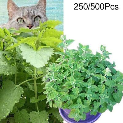 Nepeta Cataria Seeds Catnip Catmint Herb Plant Garden Bonsai Decor 250/500Pcs