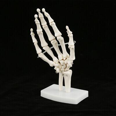 White Life-size Hand Skeleton Model Educational Hand Bone Mold Anatomical Hand