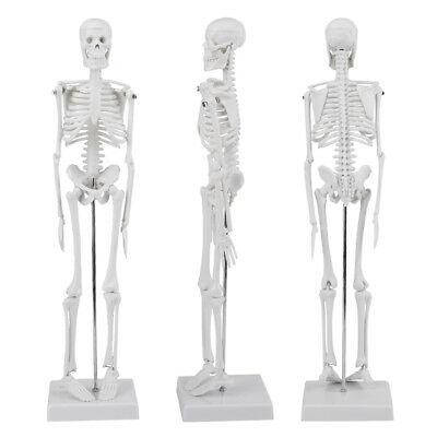 High Quality 45Cm Life Size Medical Anatomical Human Skeleton Skull Model Stand