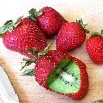 500x Rare Strawberry Kiwi Seeds Sweet Fruit Yard Bonsai Garden Balcony Plant Mgi Home & Garden