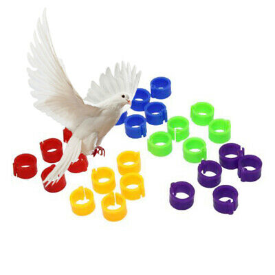 100Pcs Cute Birds Poultry Duck Pigeons Dove Parrot Leg Foot Bands Clip Rings