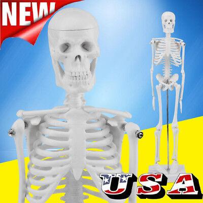 45cm Human Anatomical Anatomy Skeleton Model Fexible Medical School Teaching