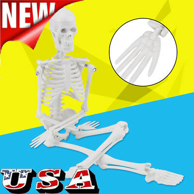 45cm Human Anatomical Anatomy Skeleton Model Fexible Medical School Teaching Us