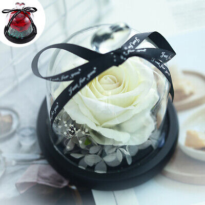 Valentines Day Gift Exclusive Rose In Glass Dome With Lights Mother's Day (Exclusive Valentine Gifts)