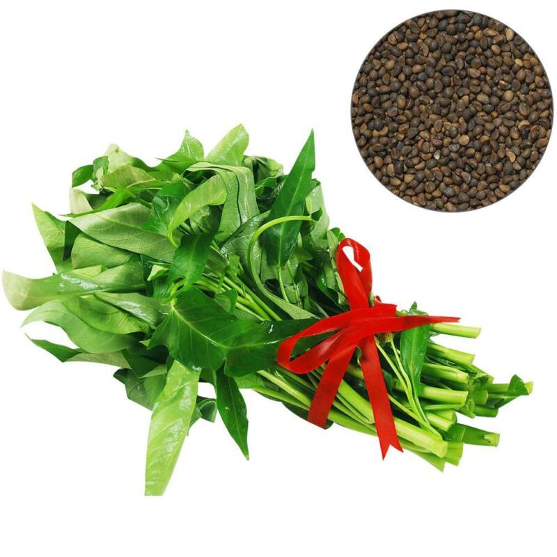 400PCS//Bag Vegetable Garden Seeds Water Kang Plant Leaf Green Spinach Seeds CHIC