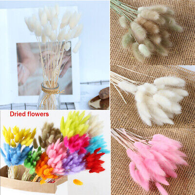 Home Decoration - 30Pcs/Bunch Bunny Tails Natural Dried Pampas Grass Reed Flower Home Decoration