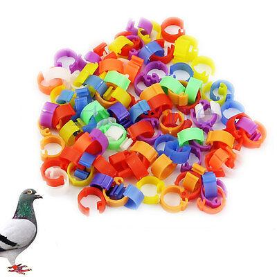 100pcs Bird Duck Chick Parrot Pigeon Plastic Hens Poultry Dove Clip Leg Rings