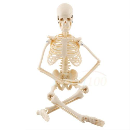 45cm human skeleton model &stand medical anatomical aid, Skeleton