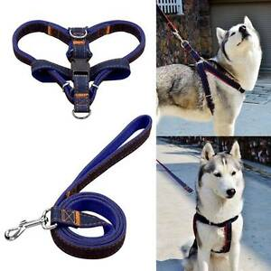 Dog Harness & matching Lead,  more control when walking your dog. Tara Dalby Area Preview
