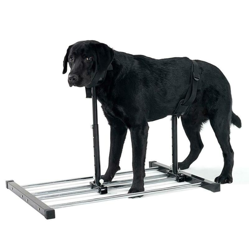Adjustable Grooming Breeding Stand With Collars Dog Reproduction Bracket M Size